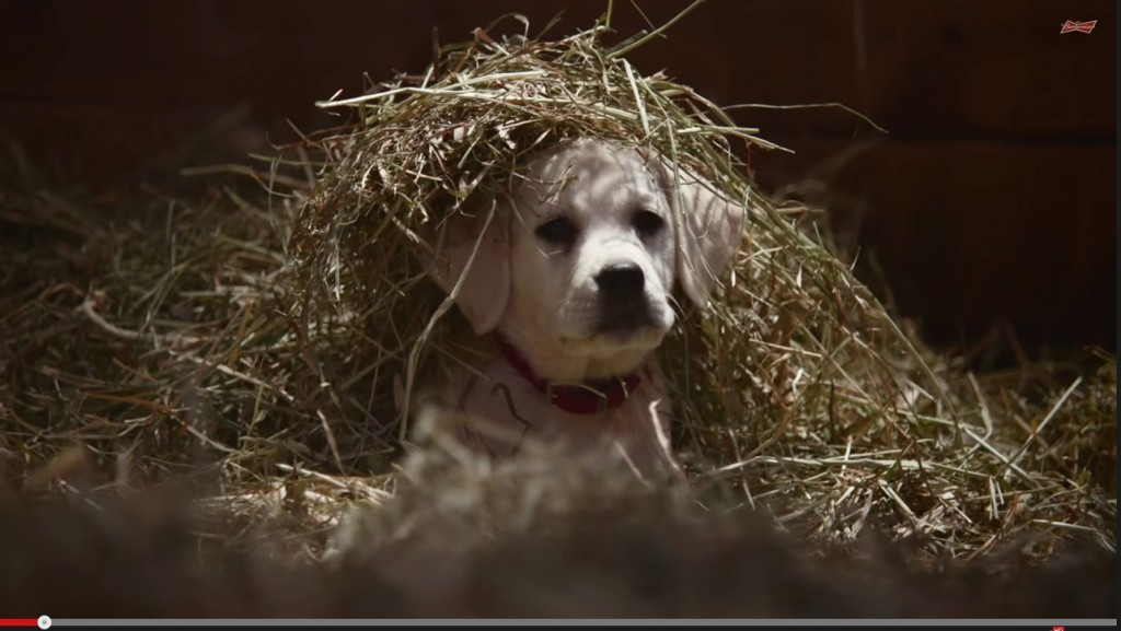 "Viral Video - 2015 Budweiser Super Bowl Commercial ""Lost Dog"" 